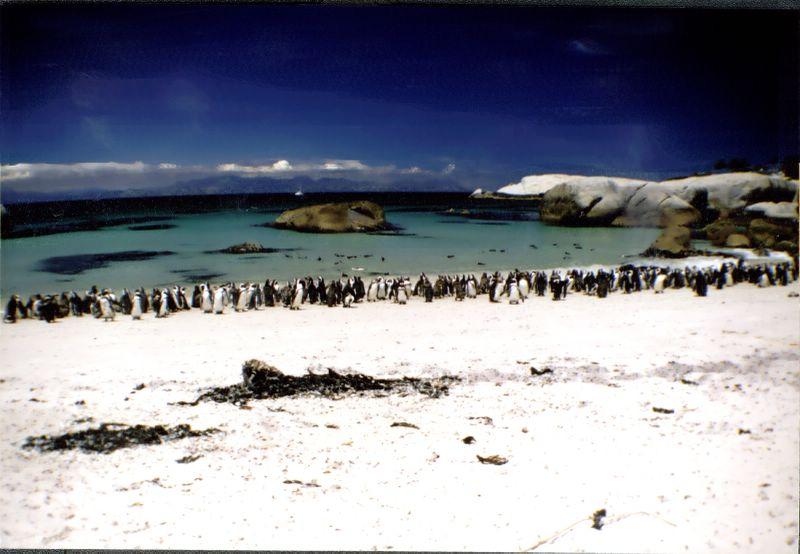 03 guney afrika penguen sahili